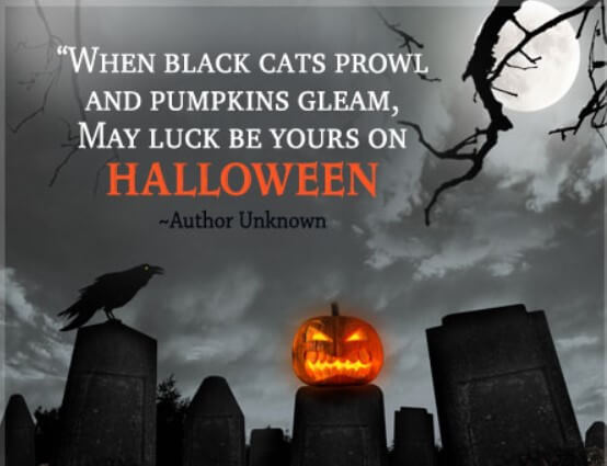 Halloween Quotes About Bats